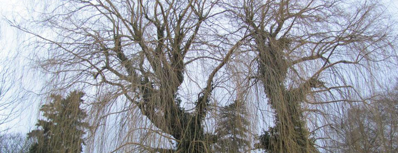 Maxime Debelle Arboriste-Grimpeur - Entretien des espaces verts